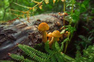 гриби на колоді