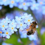 Все про бджіл: цікаві факти про невтомних трудівниць