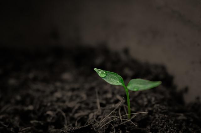 Як отримати високий урожай: підготовка та засівання насіння