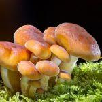 Все про гриби: що це таке?