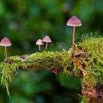 Грибне полювання в лісі: екологічний відпочинок на природі