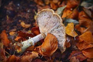 зірваний гриб