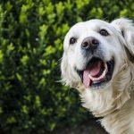 Стоматолог для тварин: як зберегти зуби вашому домашньому улюбленцю