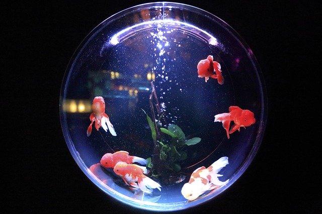 Обслуговування акваріума і правильний догляд за рибками