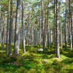 500 мільярдів посаджених дерев можуть врятувати планету