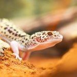 Як тварини виживають в засушливих пустелях