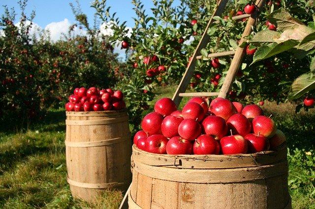 Правильний догляд за яблунями