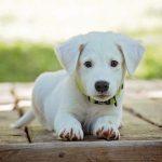 Заводимо собаку: як правильно вибрати, раціон та рекомендації