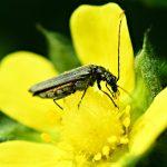 Цікаві випадки участі тварин в запиленні рослин