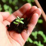 Як правильно удобрювати рослини