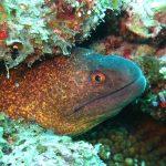 Вугор: загадкова риба з Саргасового моря